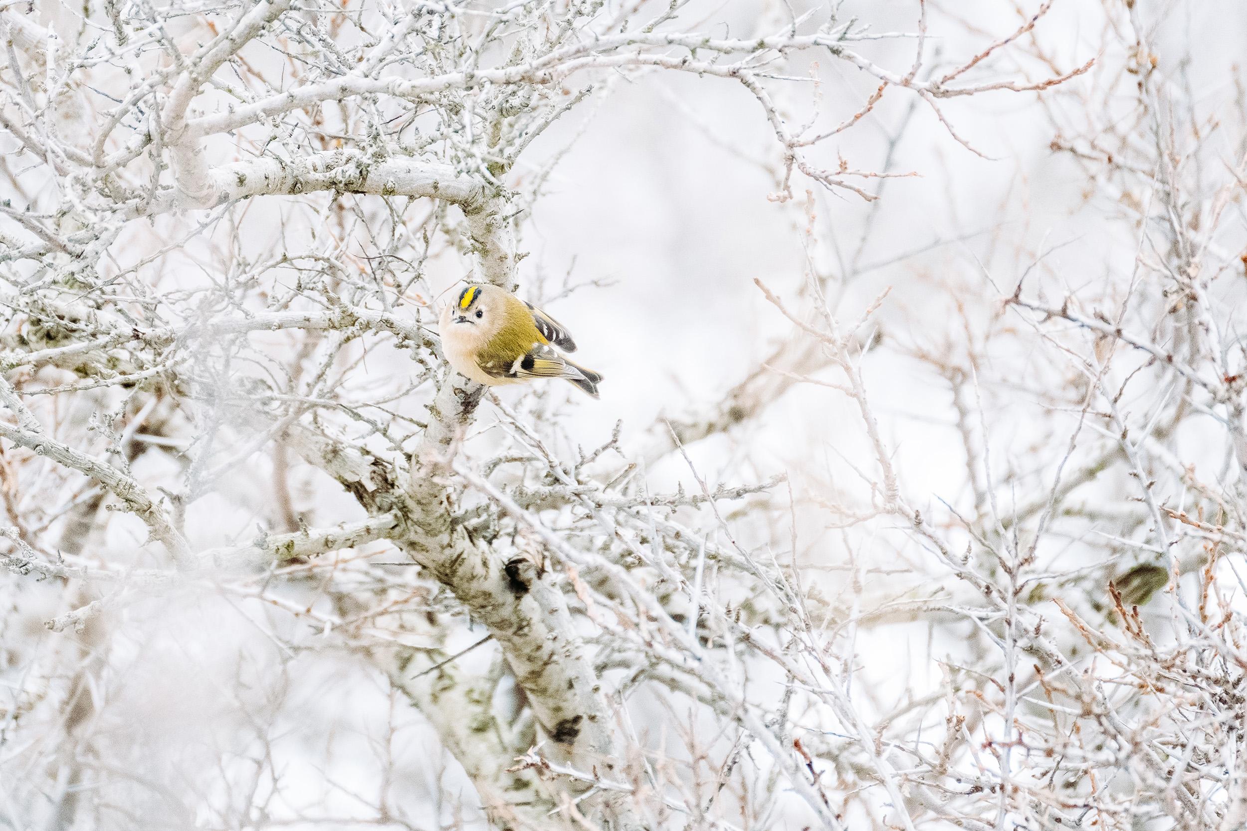Waterleidingduinen Sneeuw-7.jpg