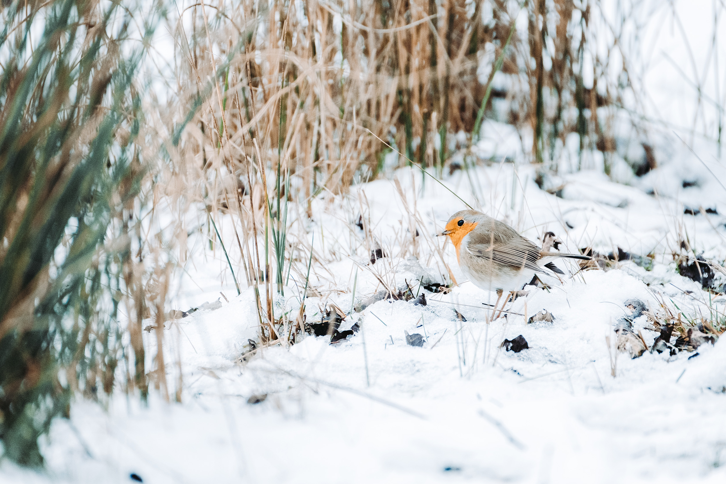 Waterleidingduinen Sneeuw-8.jpg