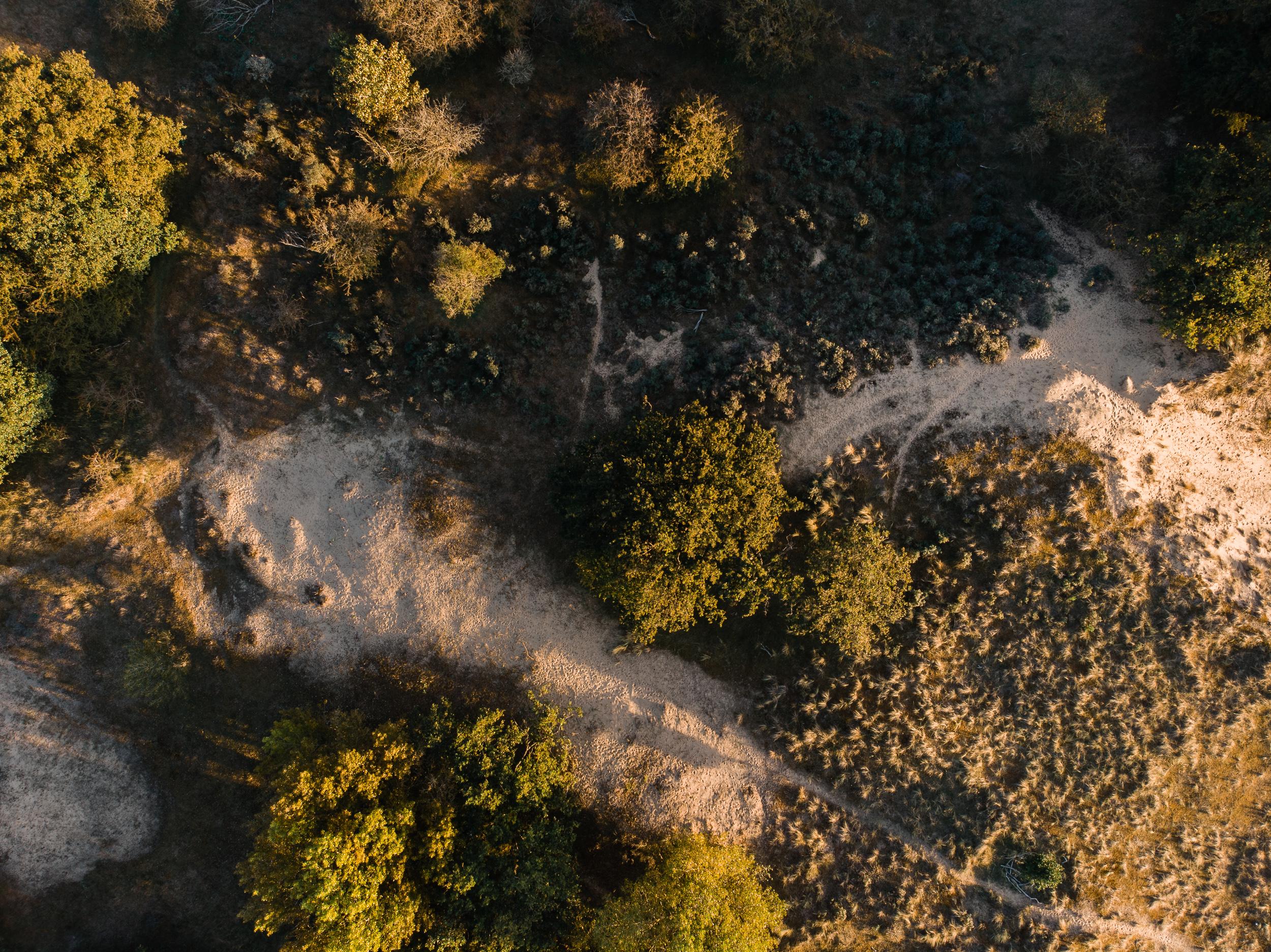 Waterleidingduinen Bronst-3.jpg