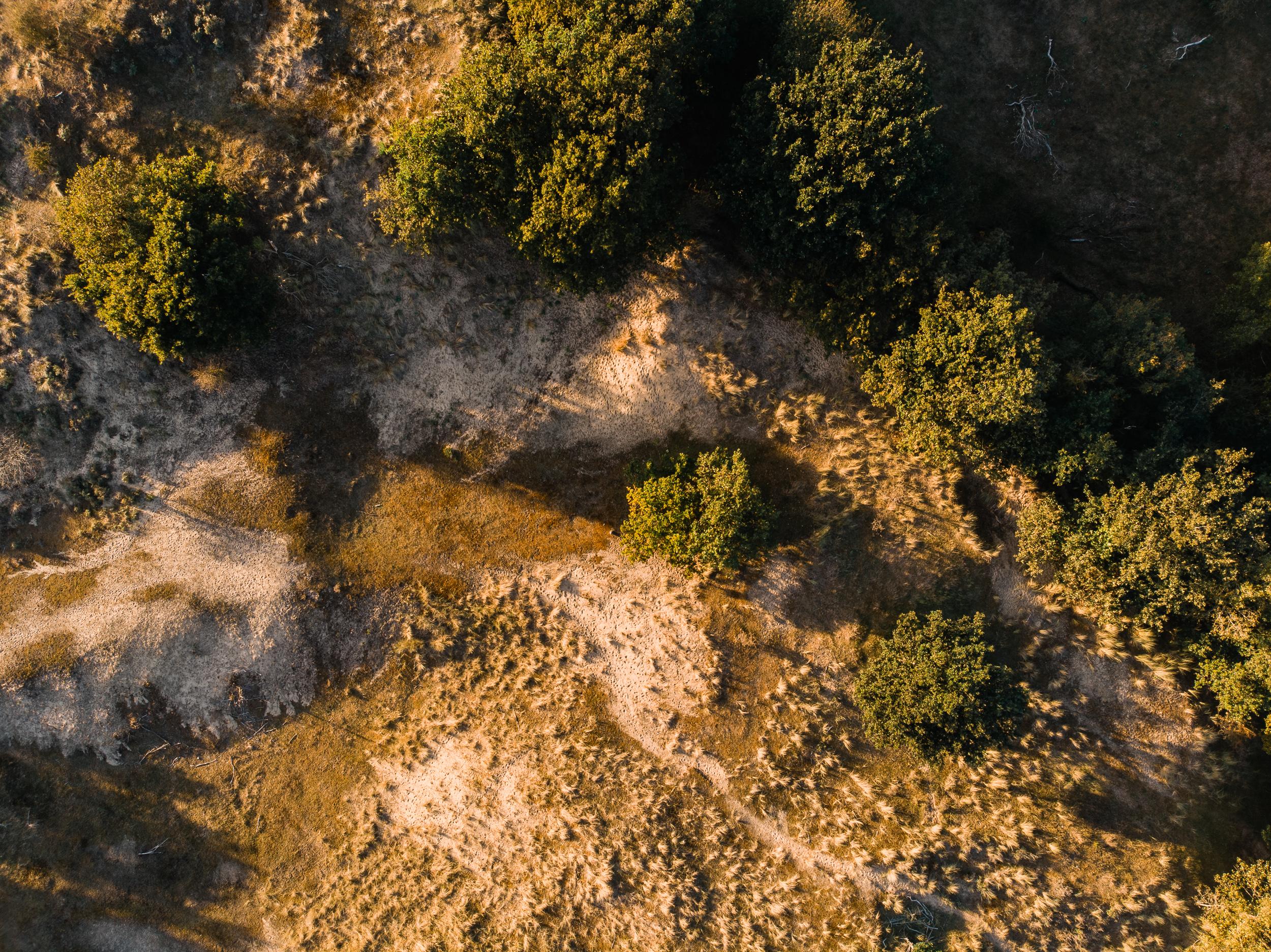 Waterleidingduinen Bronst-4.jpg