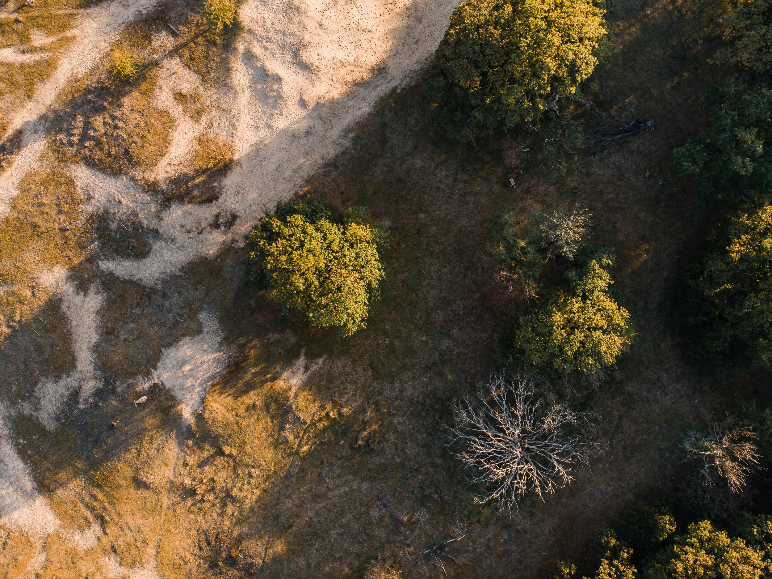 Waterleidingduinen Bronst-5.jpg