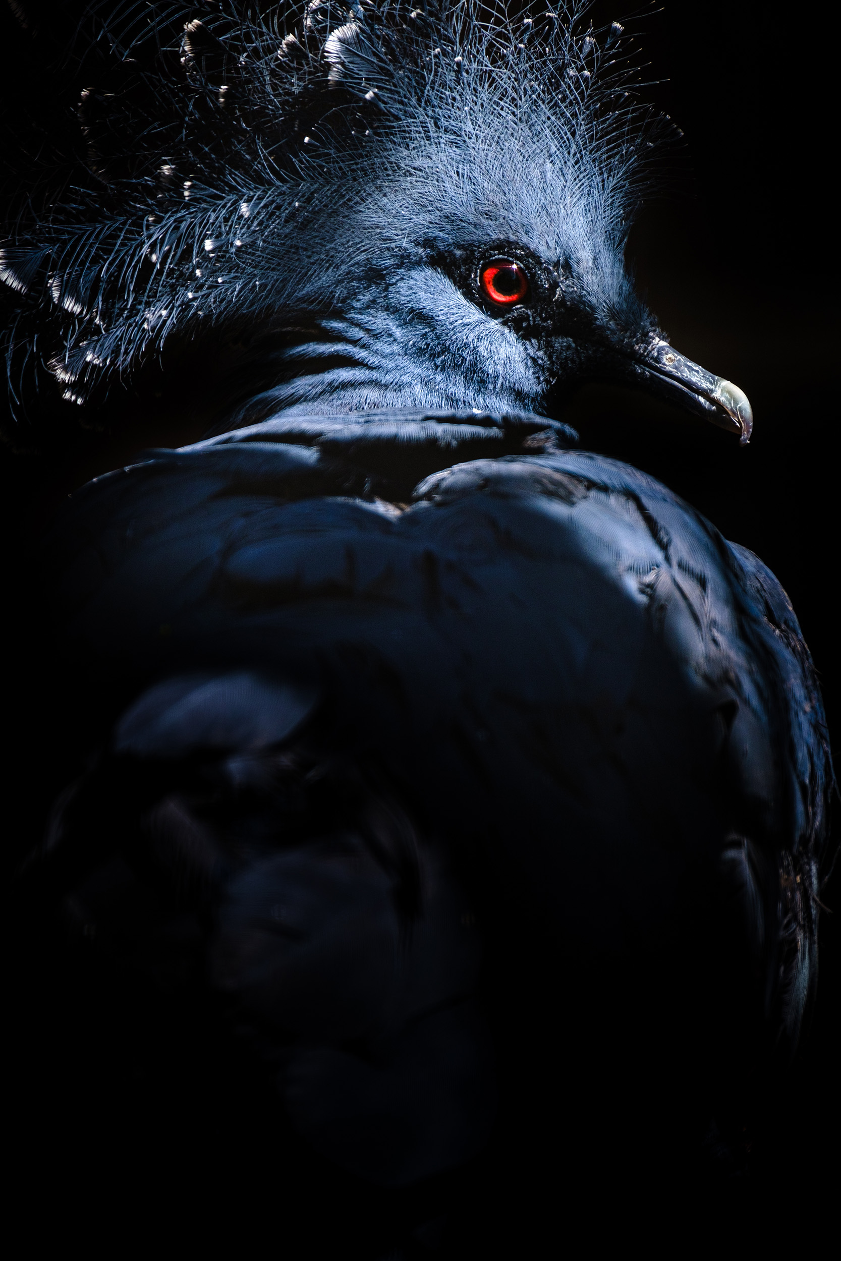 Bird Portrait-5.jpg