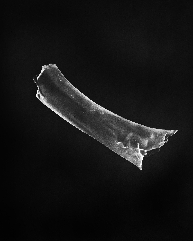 bone glow.jpg