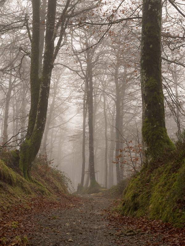 Pirineo Vasco / Basque's Pyrenees