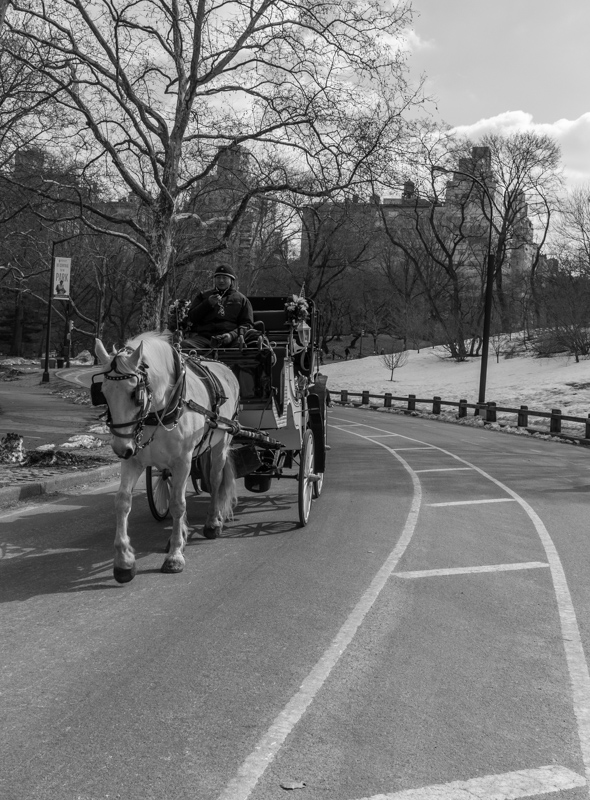 Carriage, Central Park