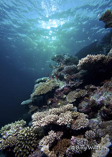 Maldives,SettingSun,AfterCopyRightAndResize.jpg