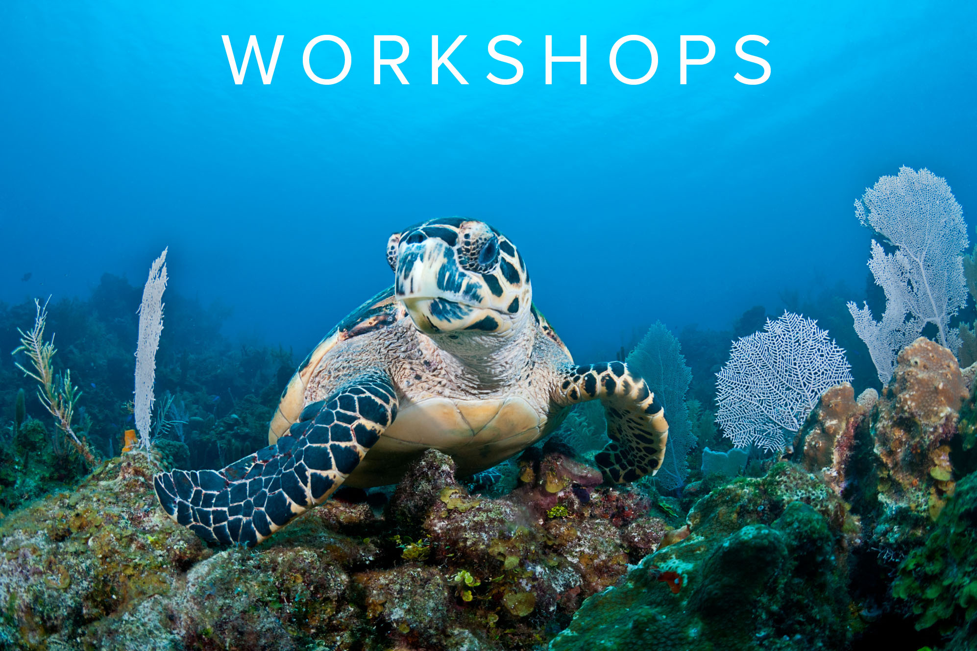 UNDERWATER PHOTOGRAPHY WORKSHOPS