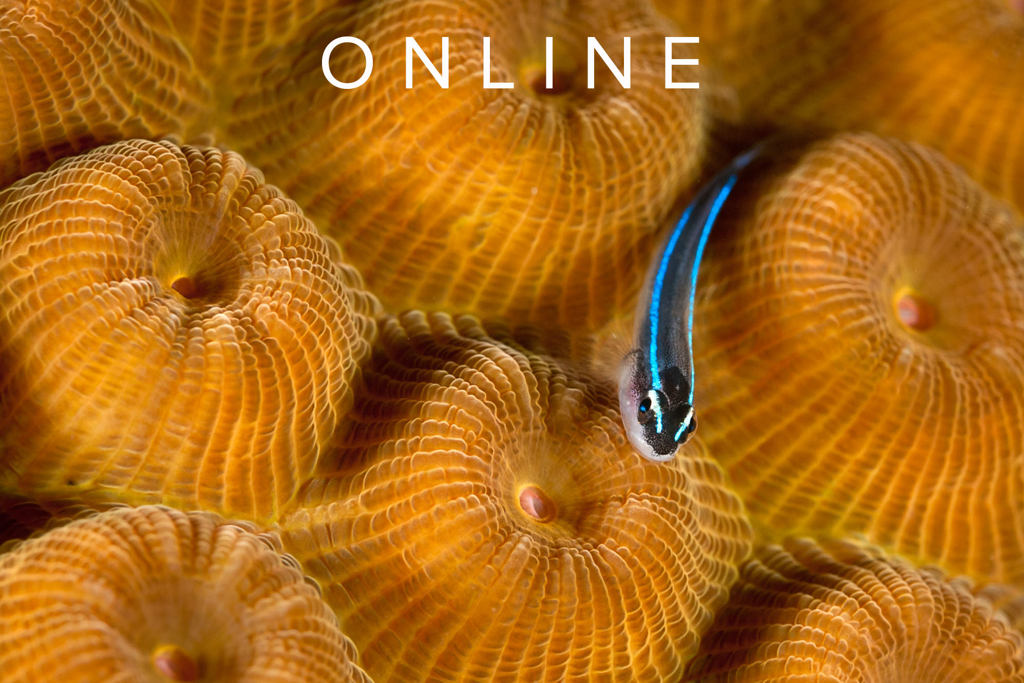ONLINE UNDERWATER PHOTOGRAPHY TRAINING