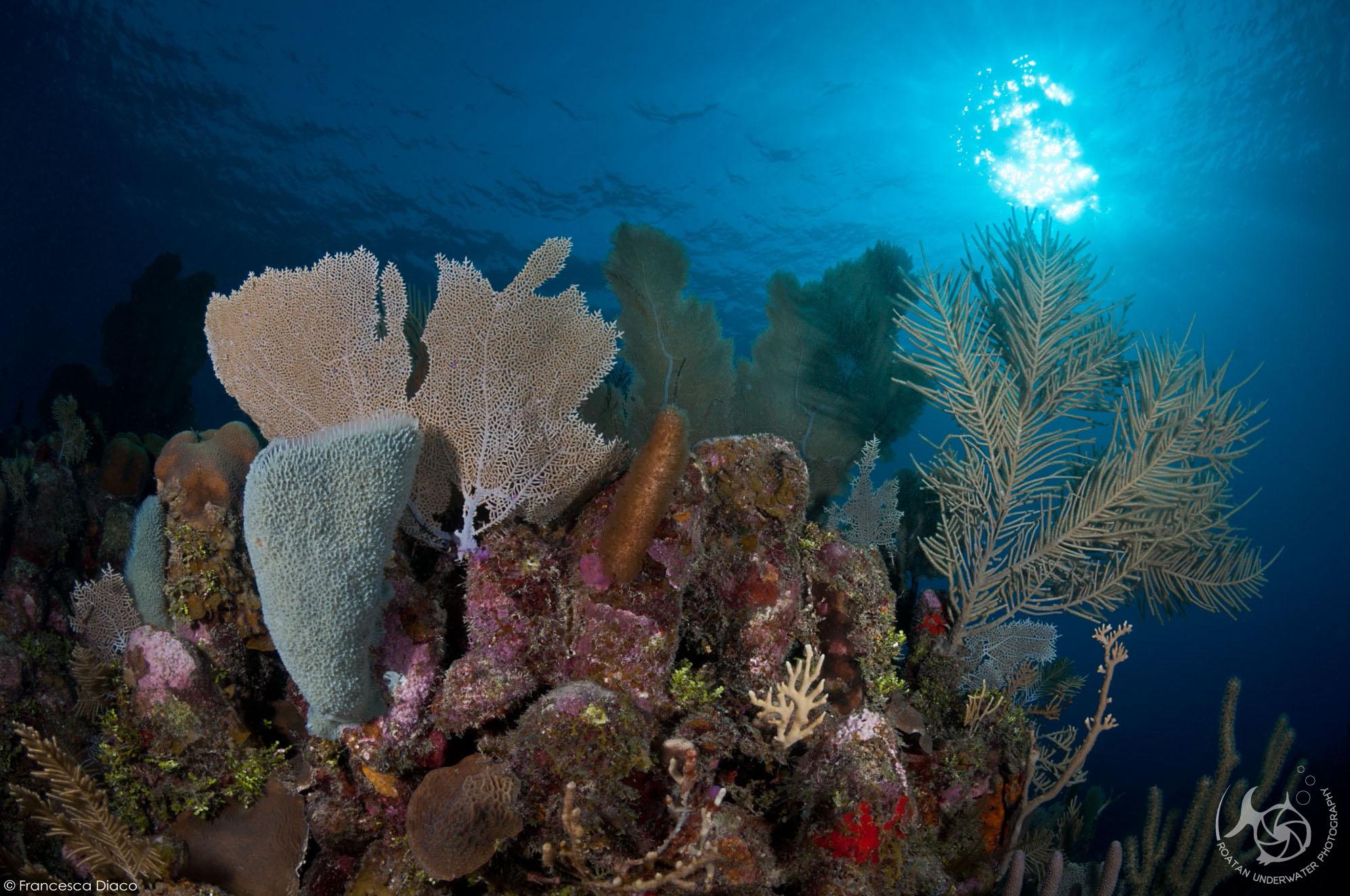Overheat Reef, Roatan