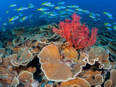 Hard Coral & School of Fish.jpg