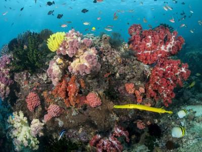 Soft Coral 3.jpg