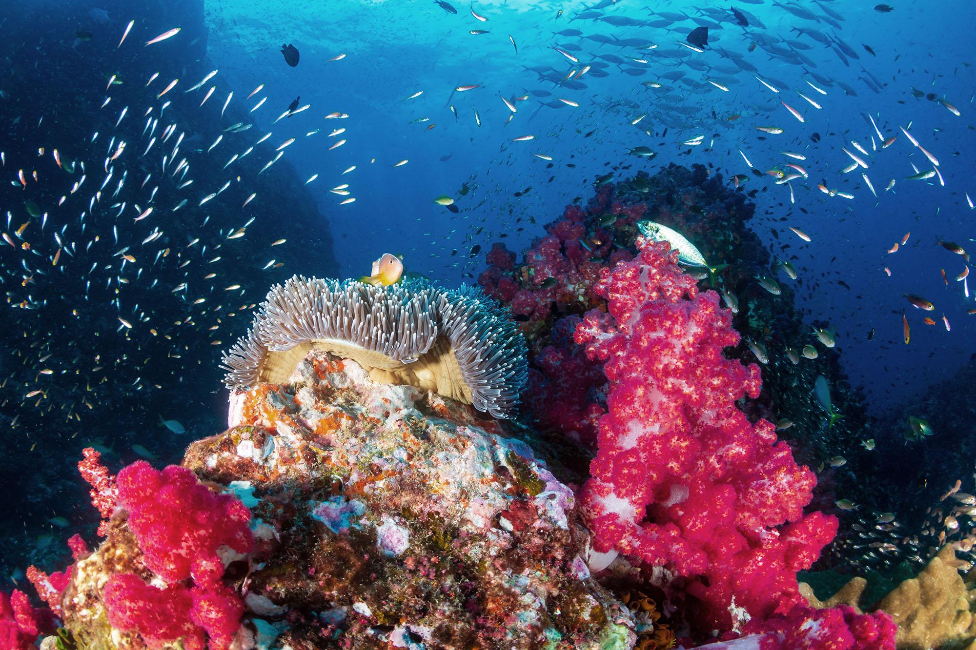 Soft Coral Garden.jpg