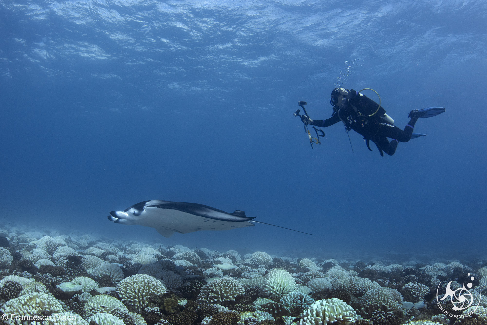 Di Faulkner having an amazing moment (which resulted in a fabulous video) with this gorgeous manta ray.