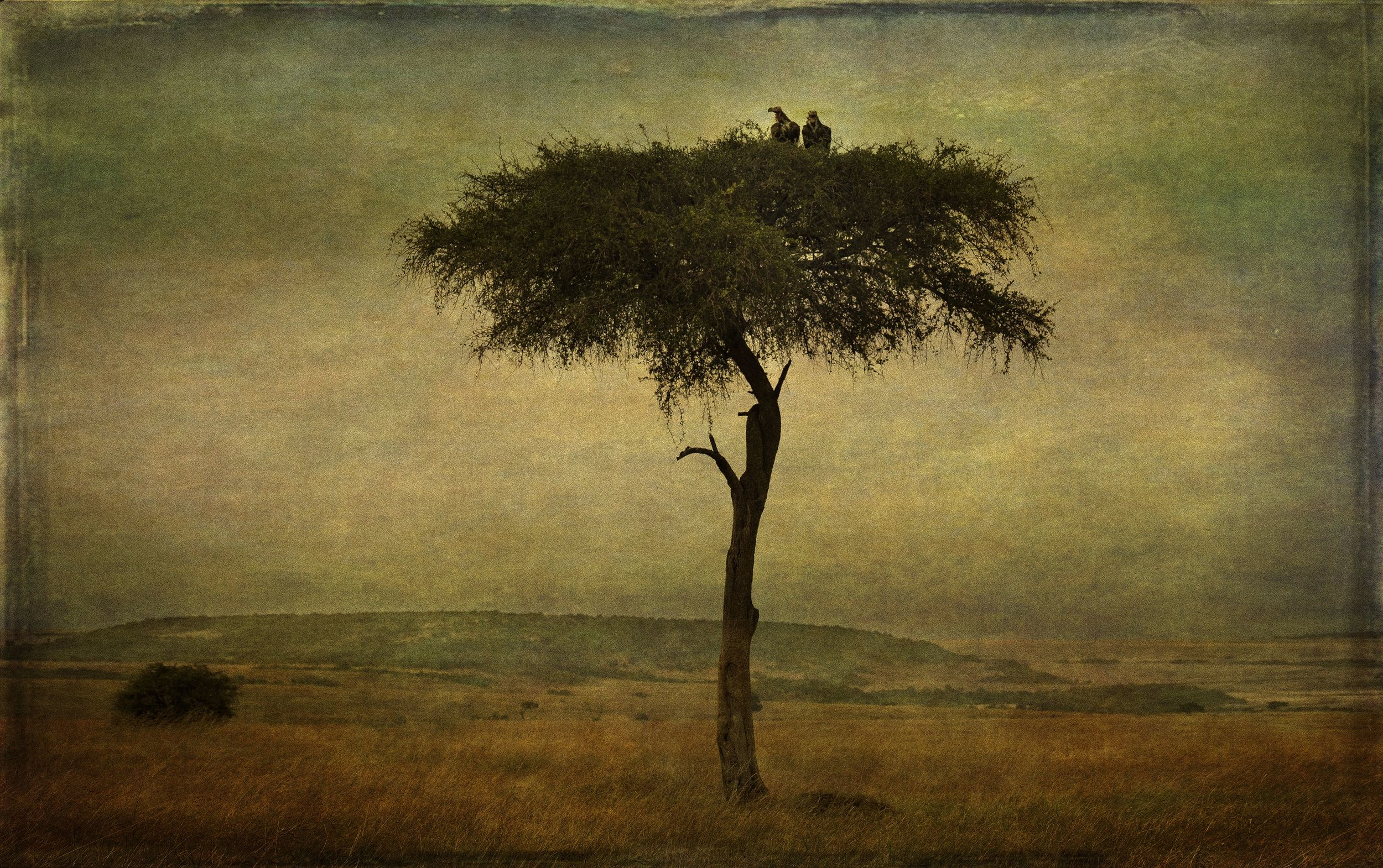 """Vultures in Tree,'"" by PenRod Studios, All Rights Reserved"