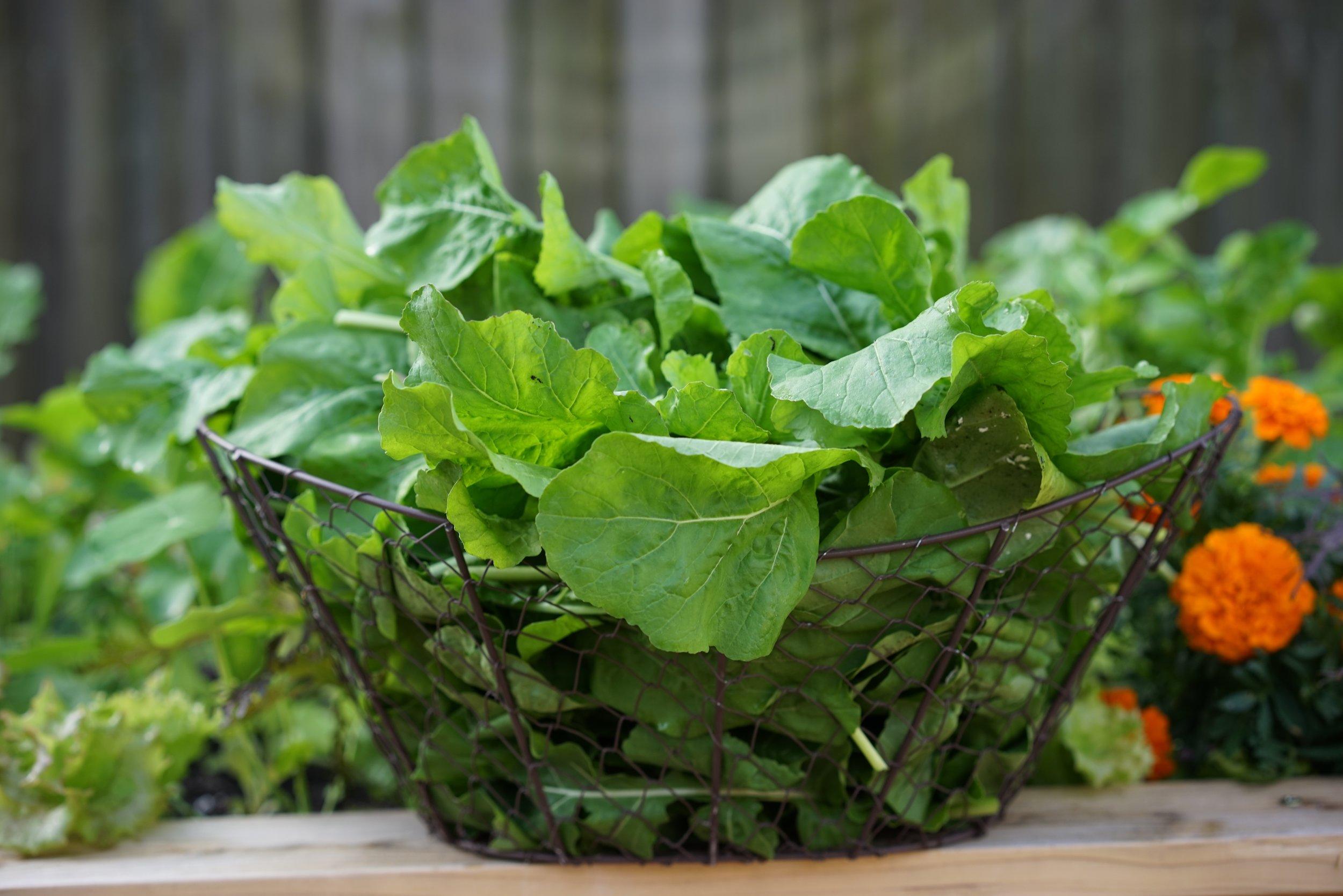 Brassica - Spring.jpg