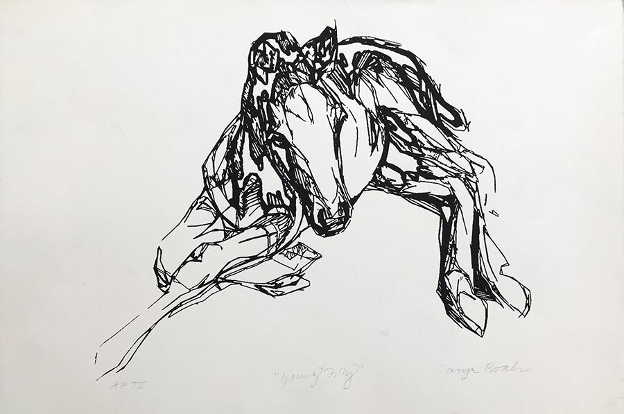 young foal.jpg