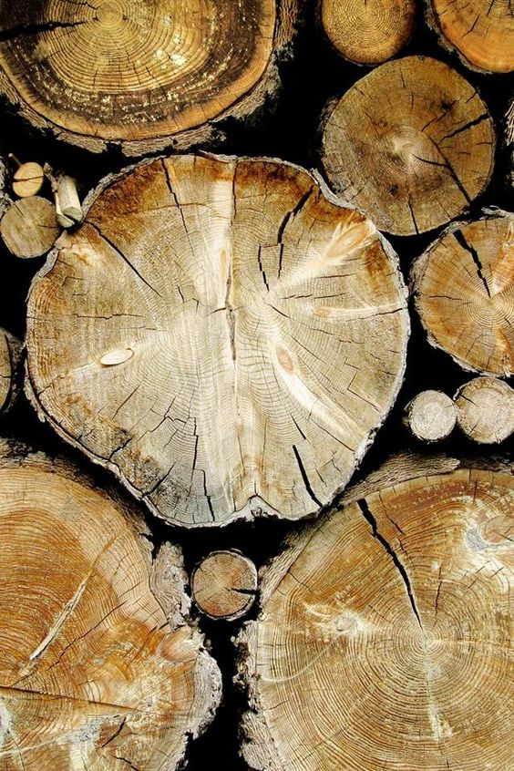 fragrant wood used in wood perfumes