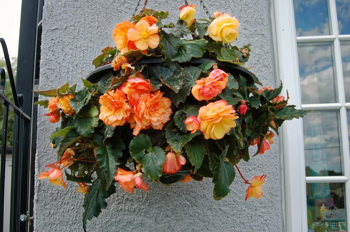 flowers_home_garden_green_petals_orange_yellow_nature-864014.jpg