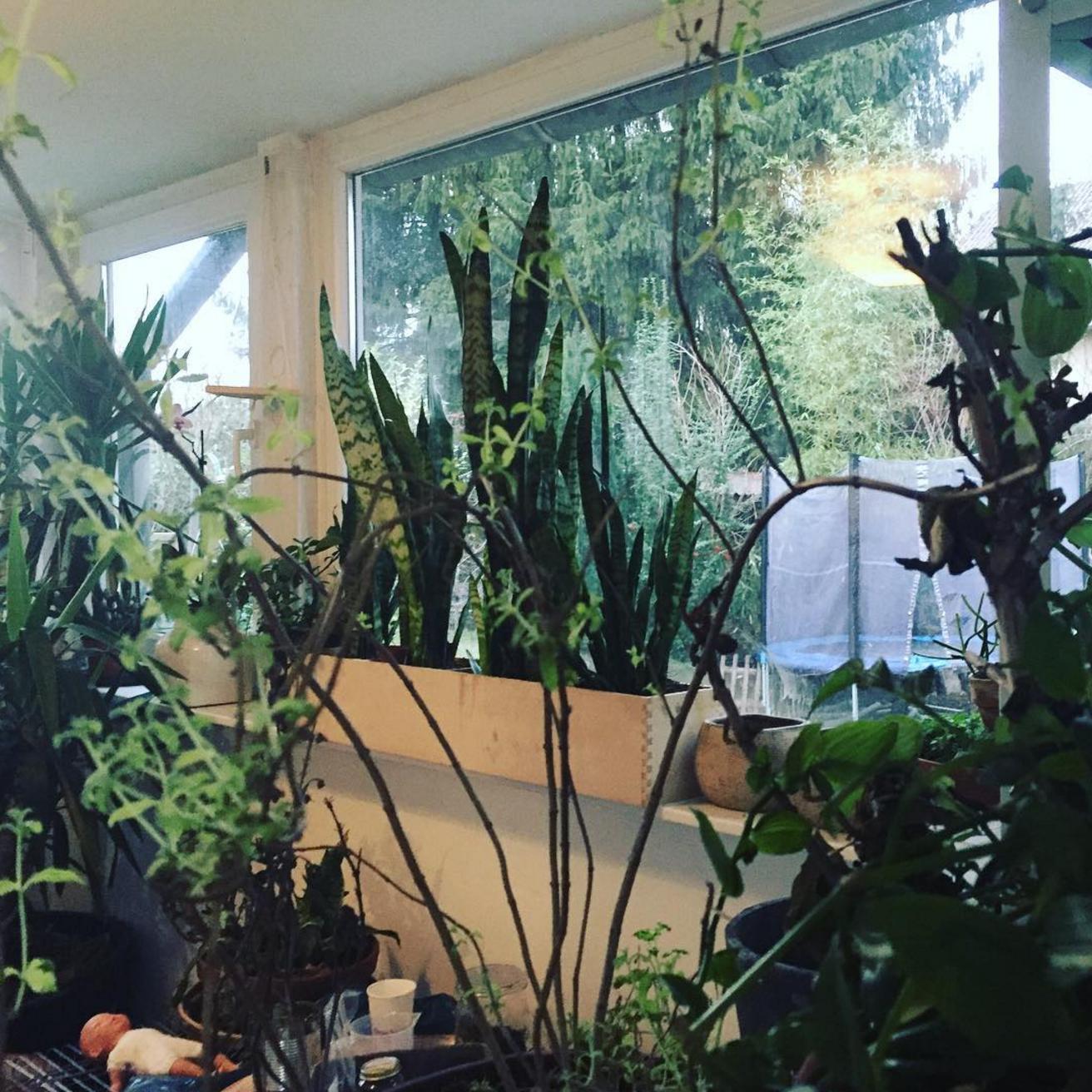"""Unsere """"Pflanztheke"""" ist derzeit unser ganzer Wintergarten..."""