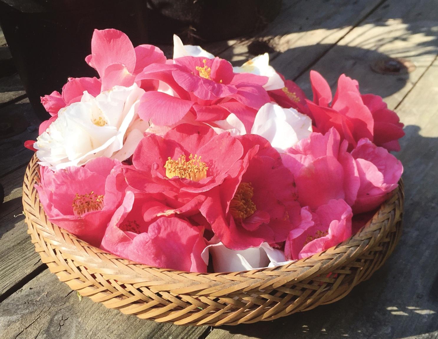 Kamelienblüten. Die benutze ich für Naturkosmetik, z.B. Haarpuder, Seifen oder die Handbutter. Im Ofen bei 50 Grad Celsius oder direkt in der Sonne trocknen.