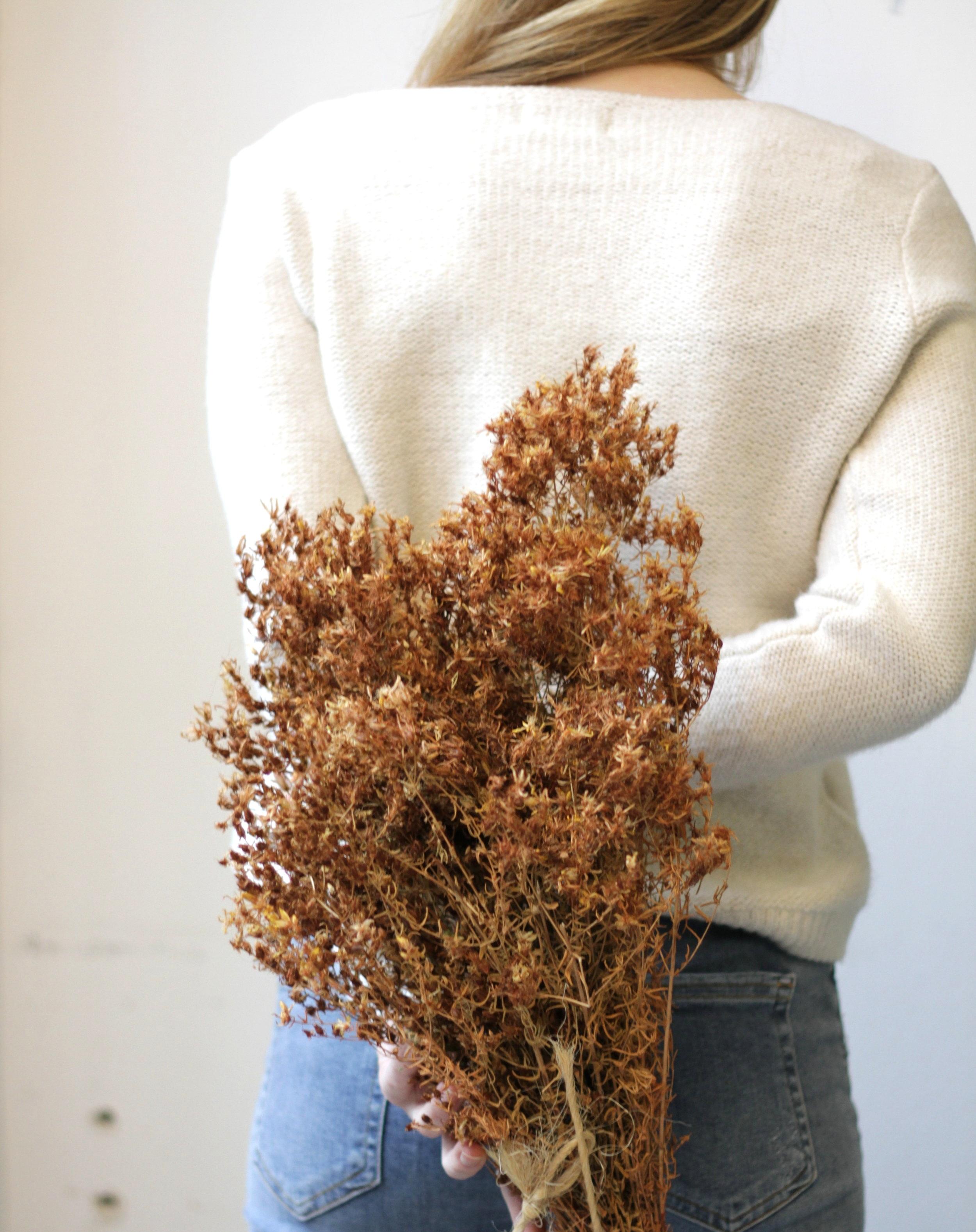 Johanniskraut sammeln Pflanzenprofil
