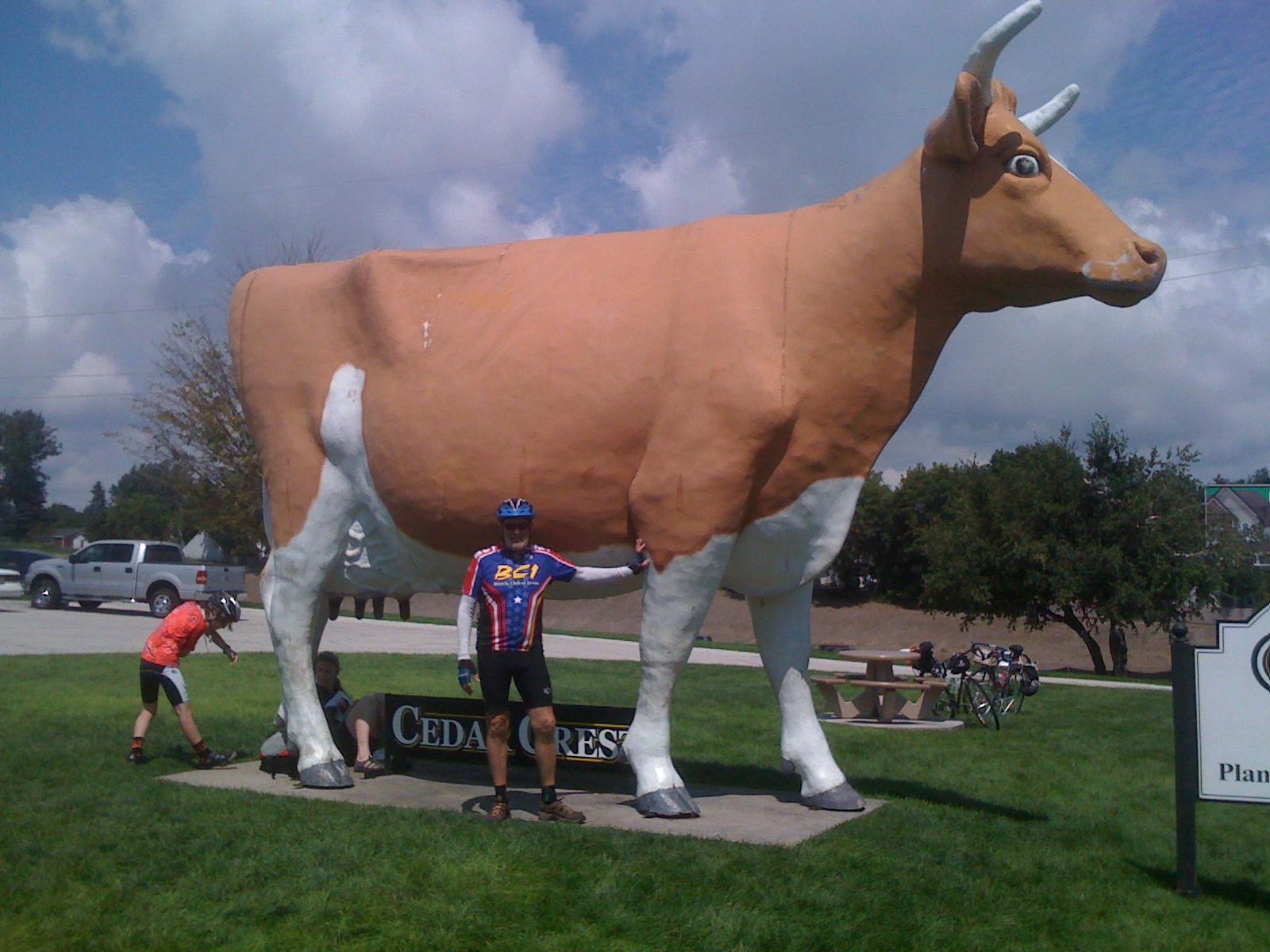 5 Jim trys pushing cow copy.jpg