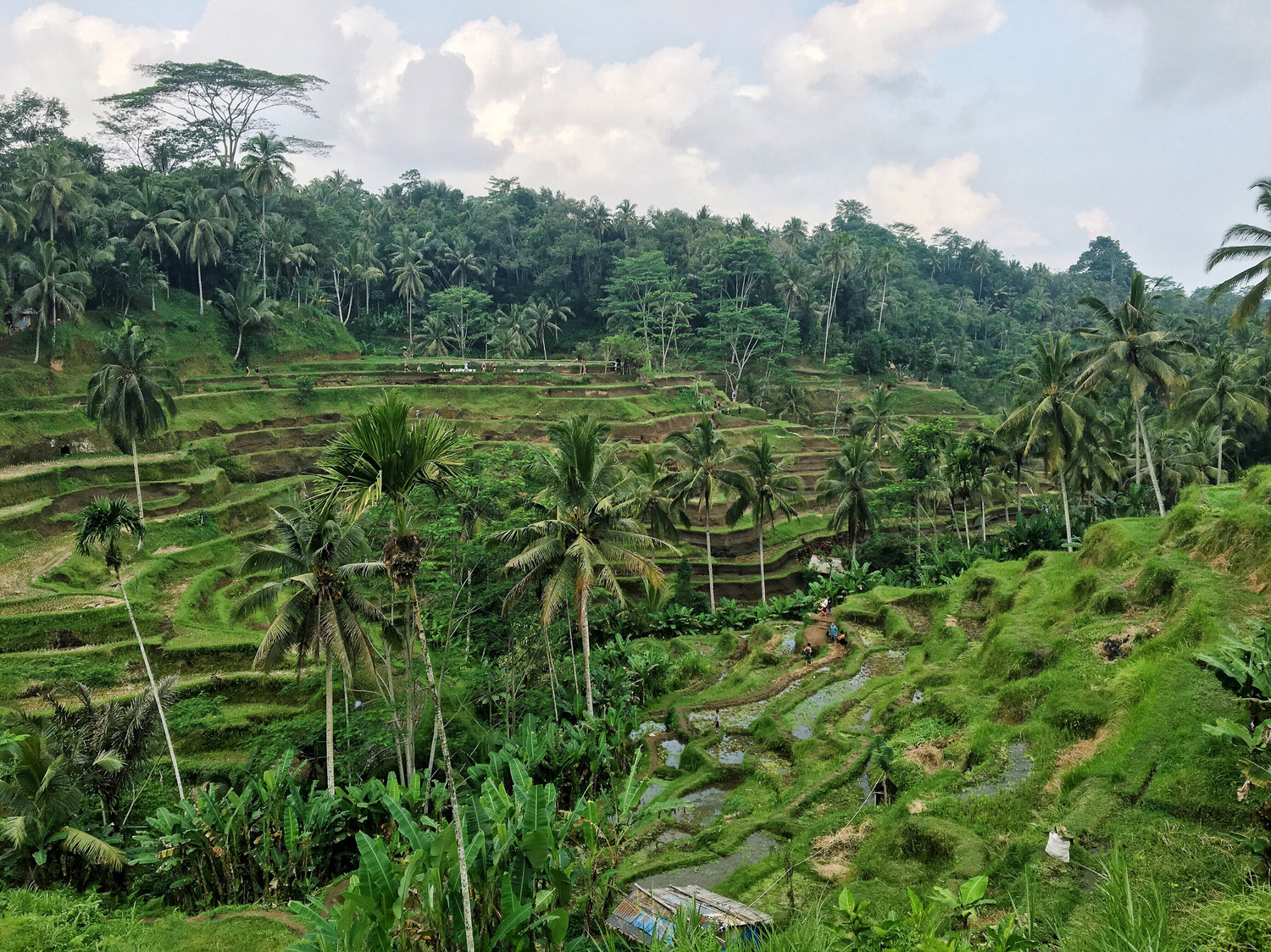 r&R Guide to Ubud - January 6th, 2017