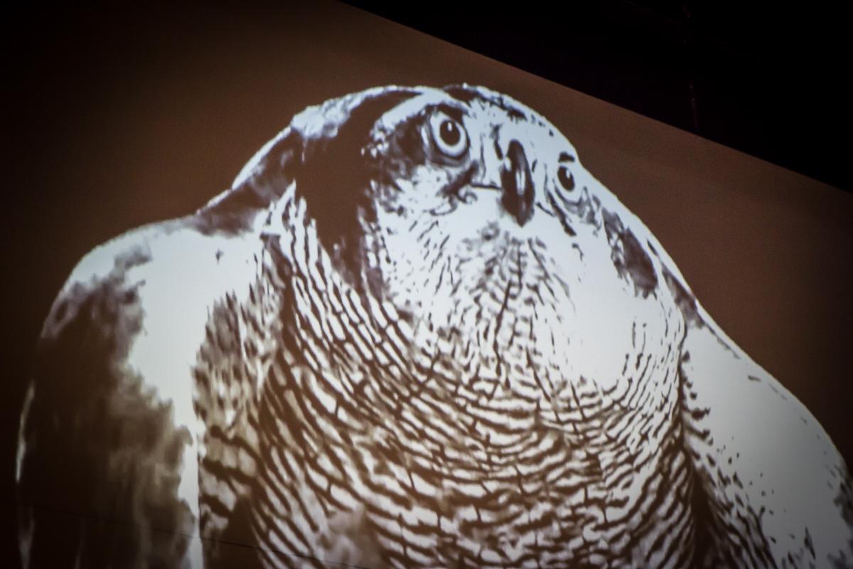 Visual of a bird