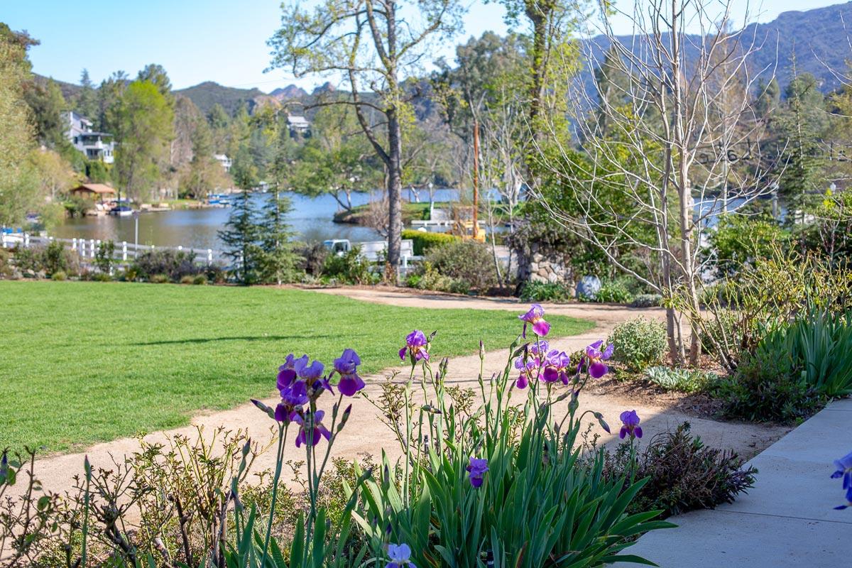 Lawn-with-Irises.jpg