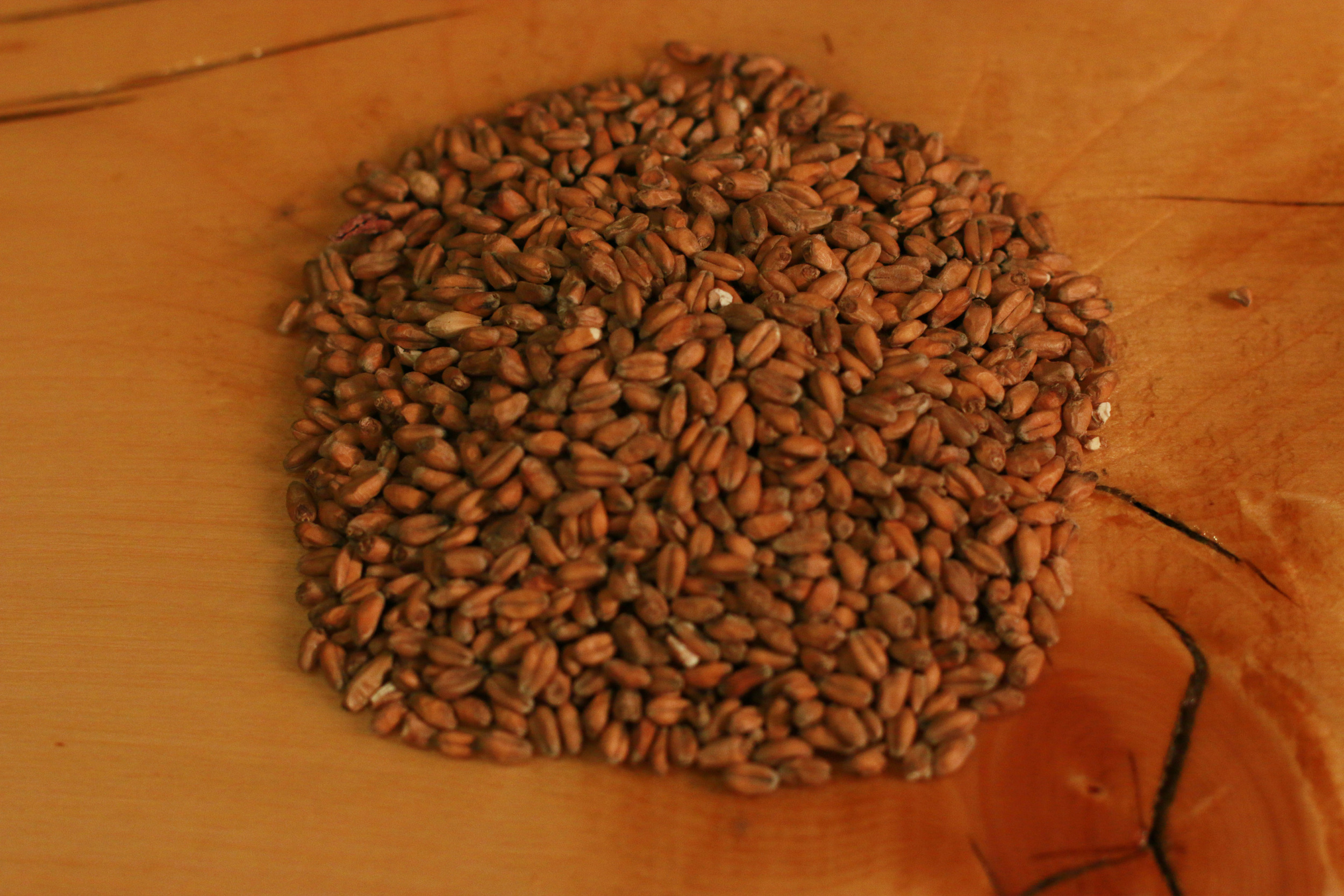 Brad  Pederson - Grains 1.jpg