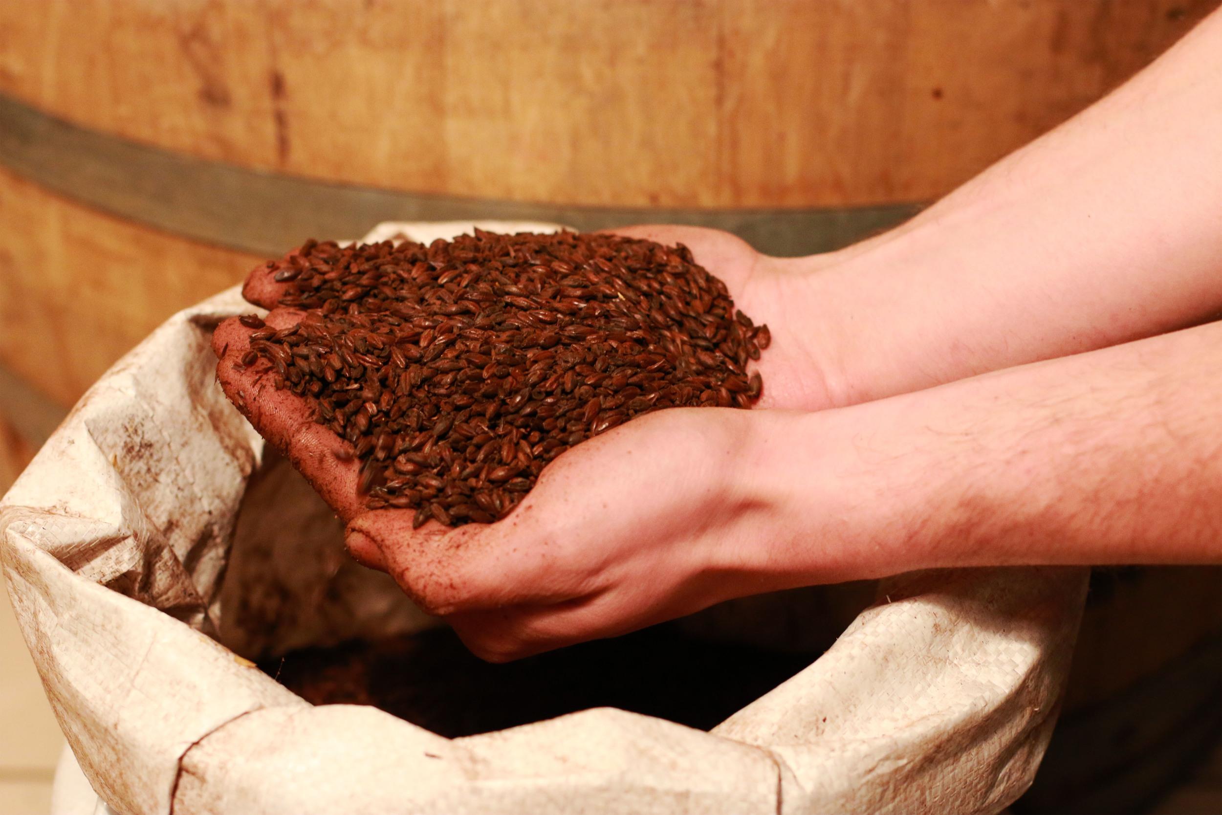 Brad  Pederson - Hands with grains.jpg