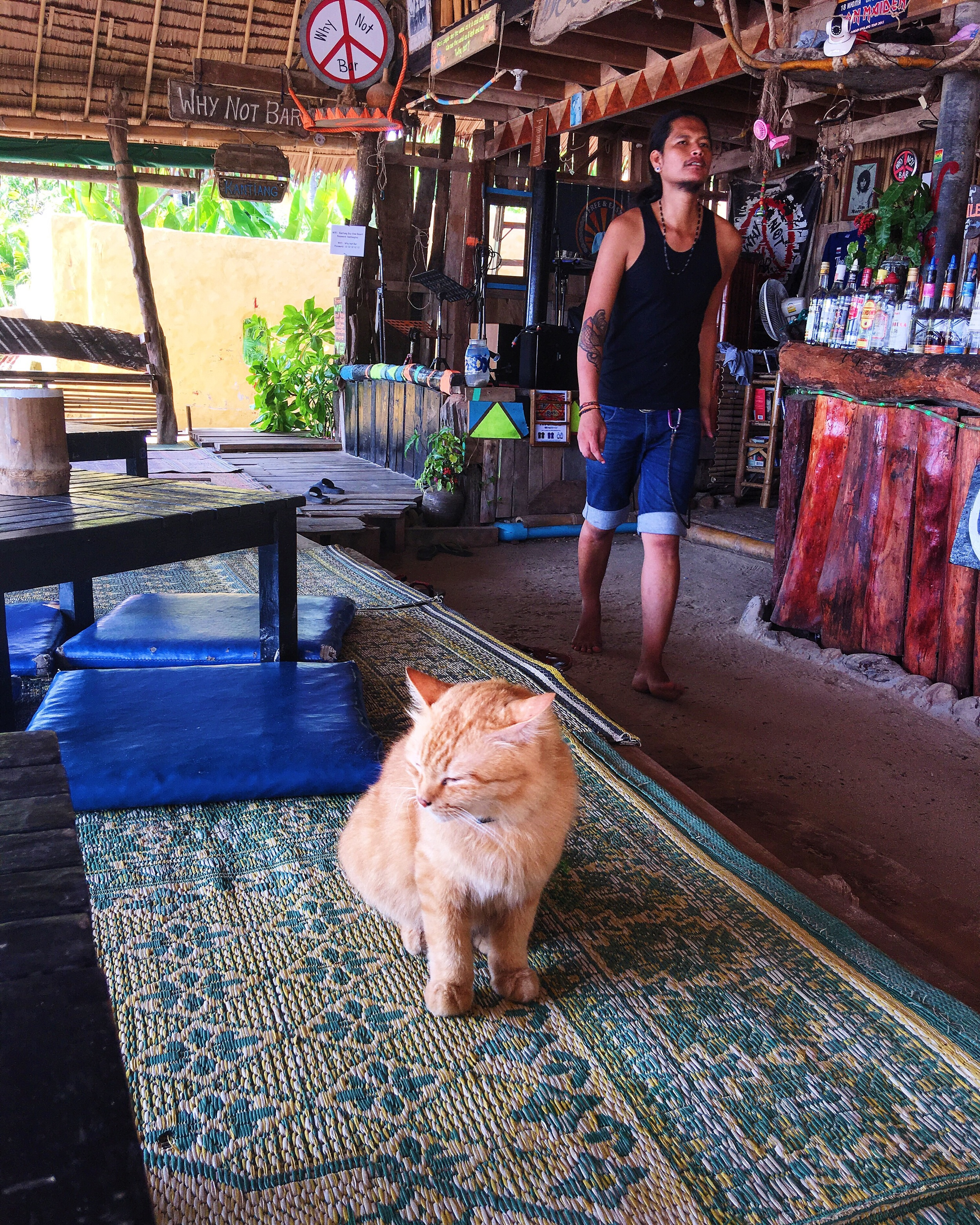 A kitty cat at Why Not? Bar, there's an animal shelter on the island who takes care of the cat population and finds them homes locally and around the world