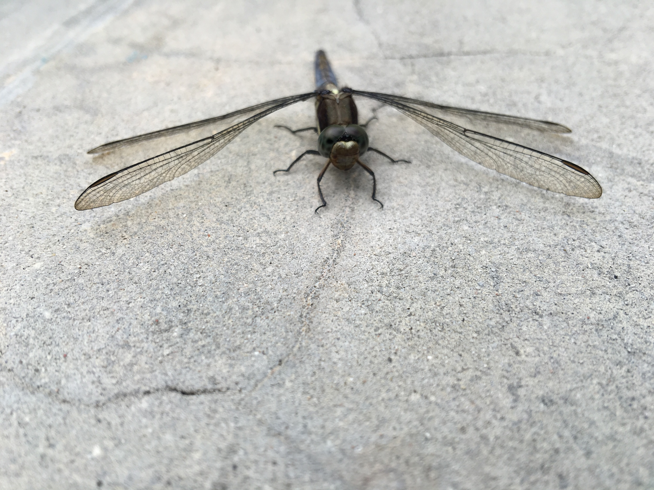 A Cute Dragonfly