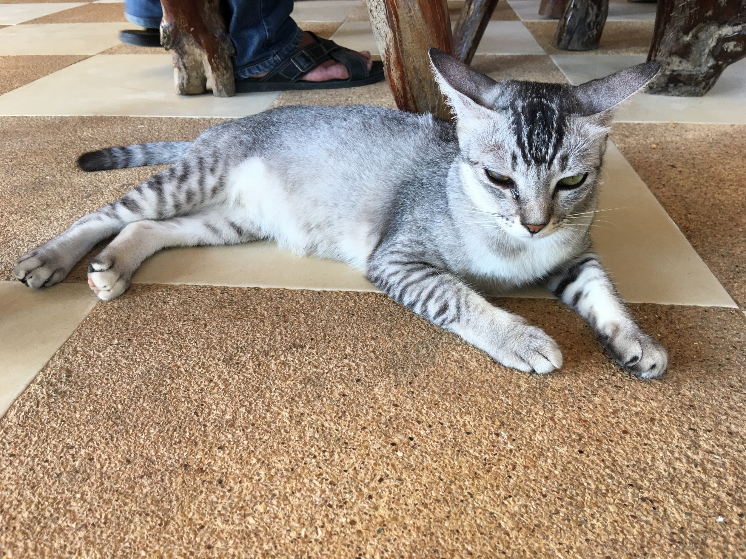 A snow bengal at Why not? Bar