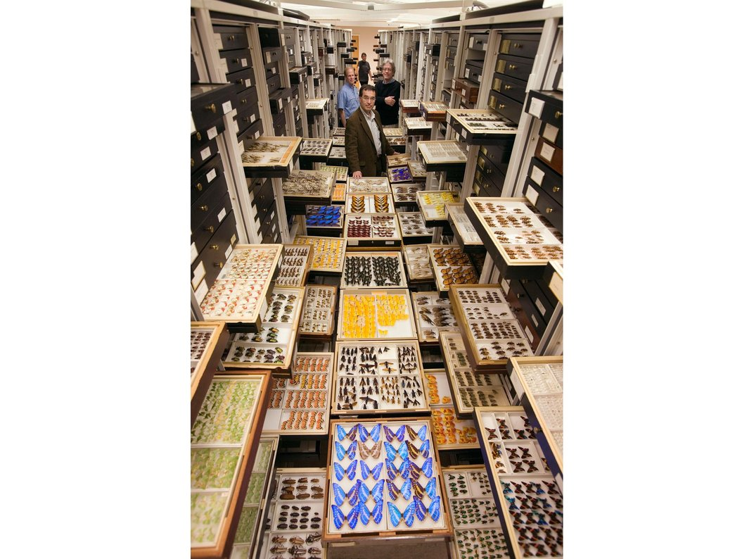 The entomology collection    Chip Clark/NHM