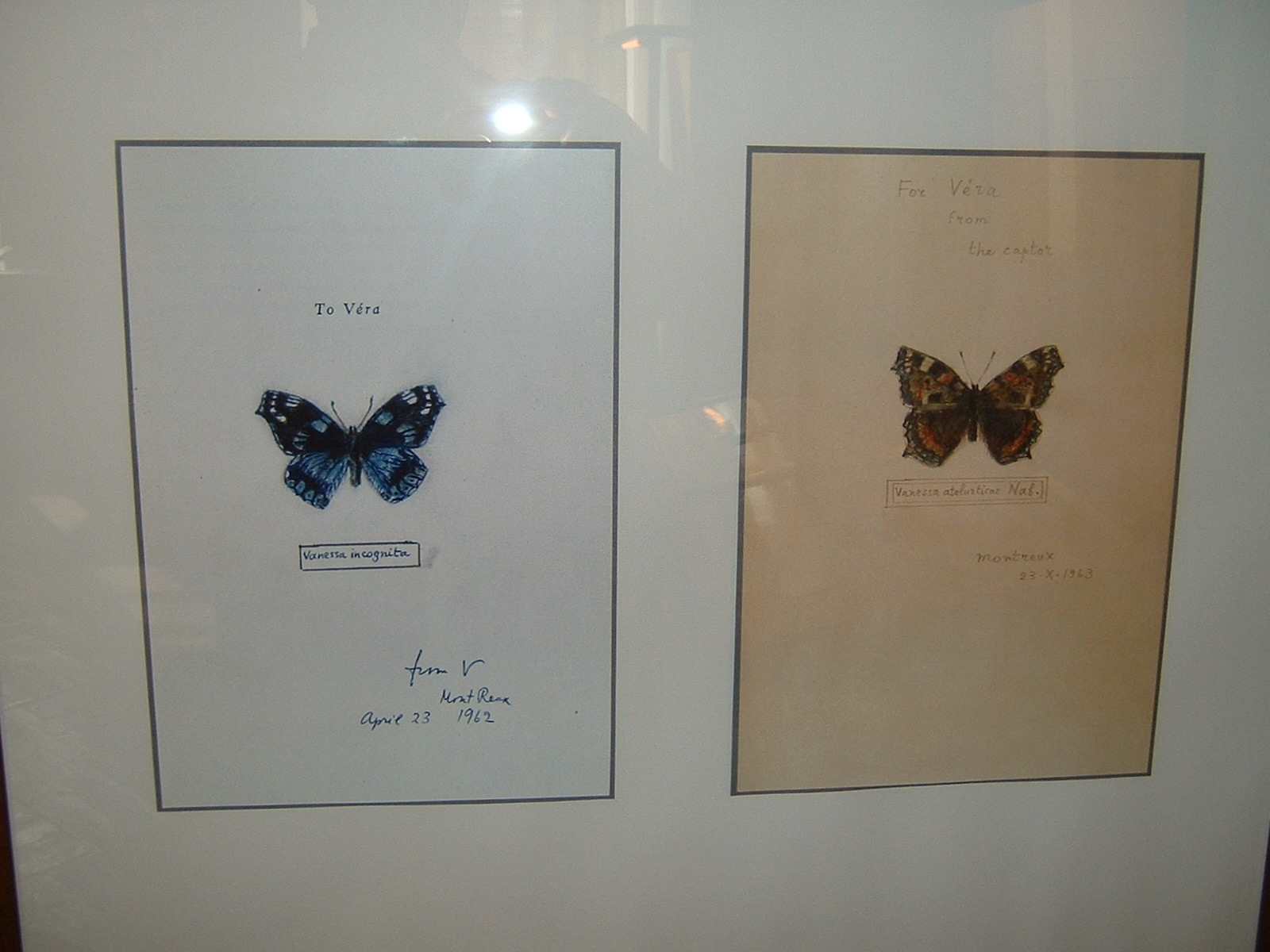 Nabokov's Butterflies | [public domain]