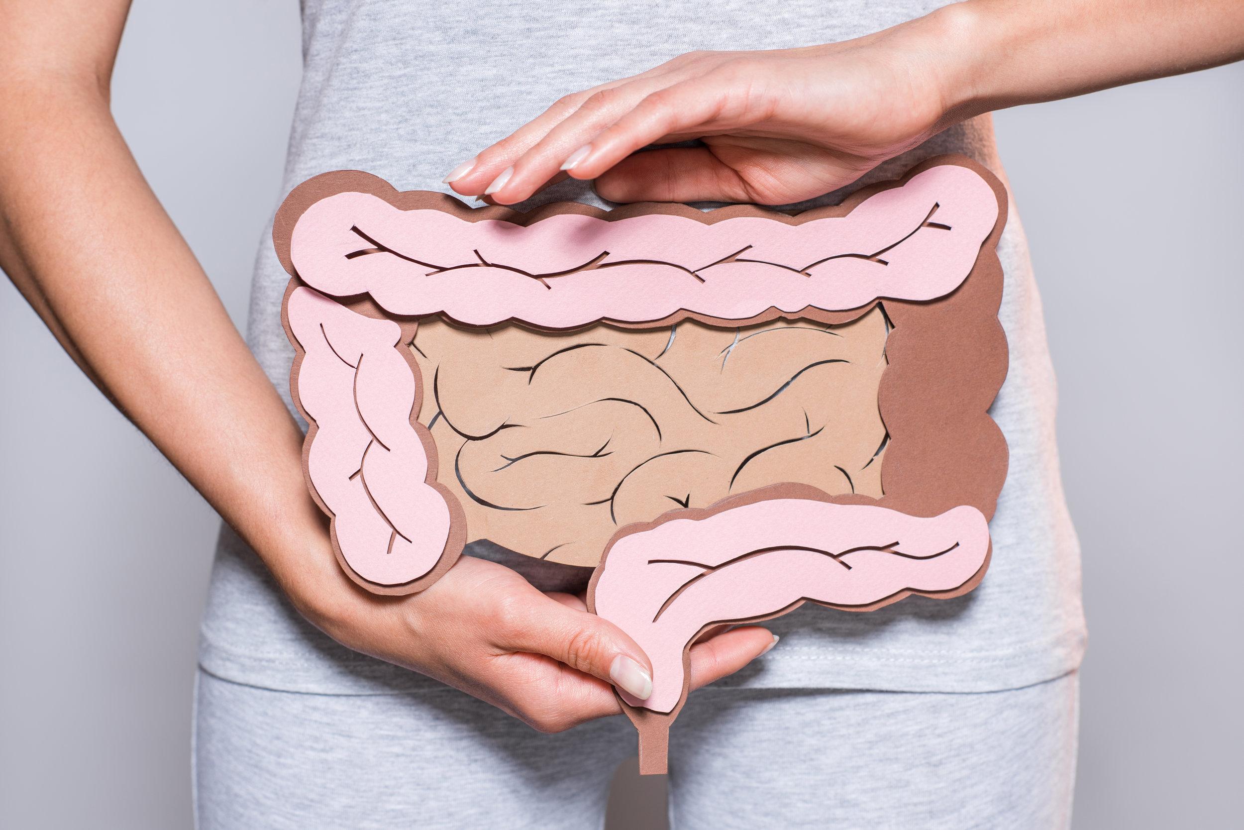 Enzimas digestivas.jpg