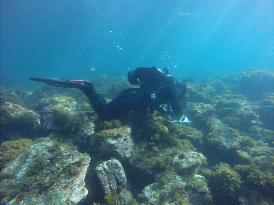 Using an underwater slate and transect tape to determine how much of the habitat is made up of different substrates, such as boulder, cobble, sand, or bedrock.  These data were used to see if moray abundance could be determined by the type of habitat in Two Harbors, Catalina.