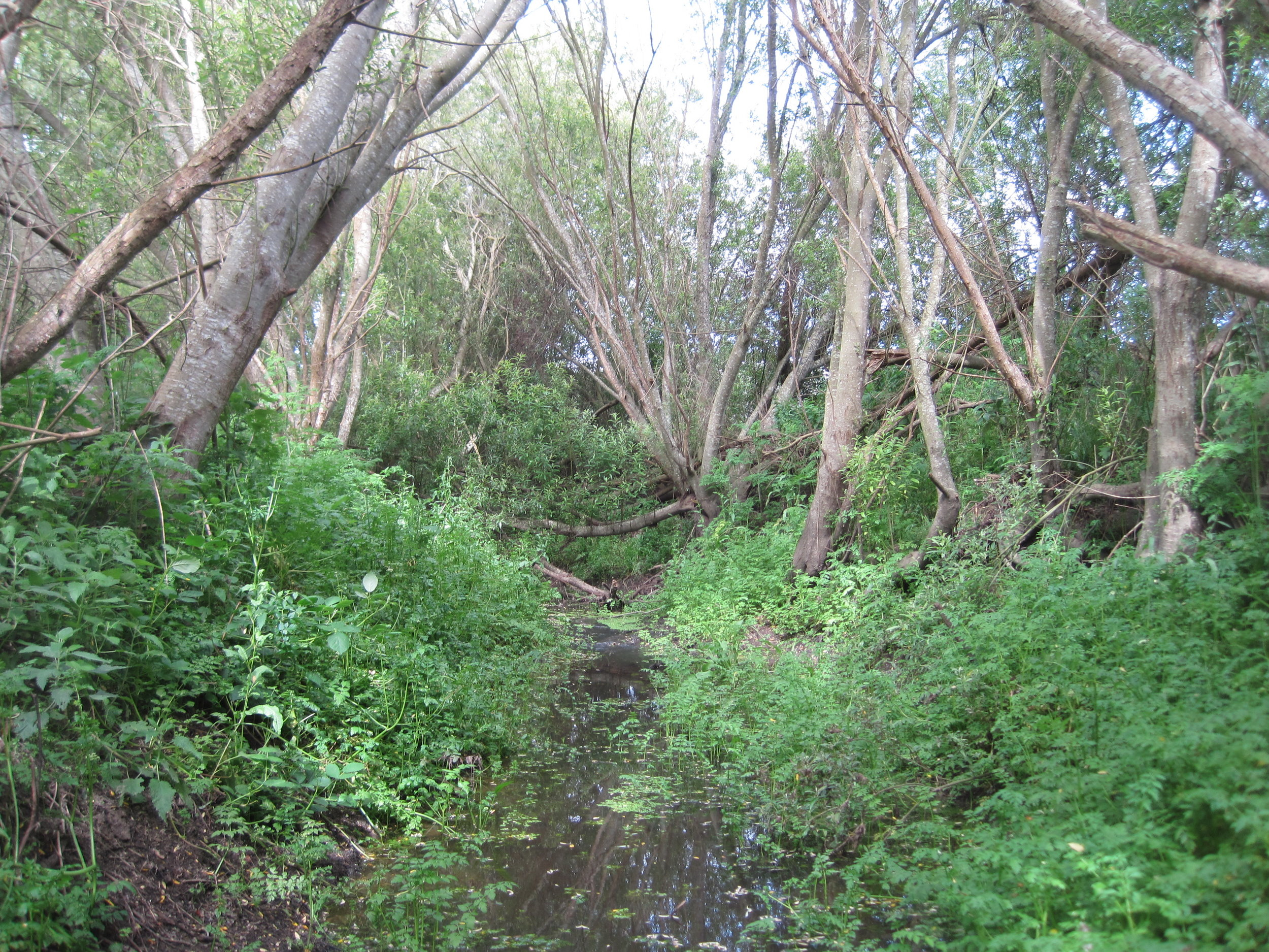 Longer stretches of tress, such as the established stream side trees shown here, can protect the streams.