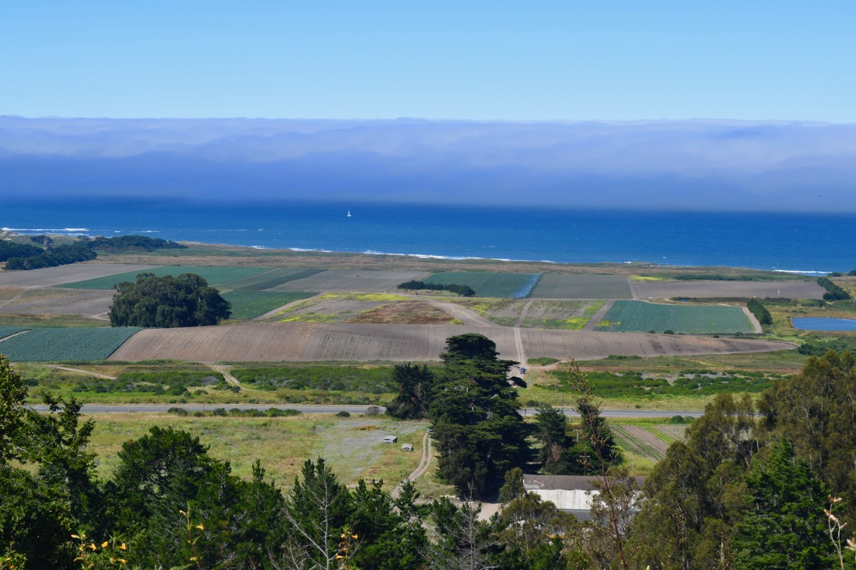 Cascade Ranch is 418 acres of land, the majority of which stretches from Highway 1 down to the Pacific Ocean. To the south (left, on this image) is Ano Nuevo State Park, famous for its elephant seal breeding ground. To the north and east are protected lands owned by the state of California. Because of this unique positioning in the landscape, Cascade has great potential to contribute a plethora of ecosystem services, if managed with that intention.