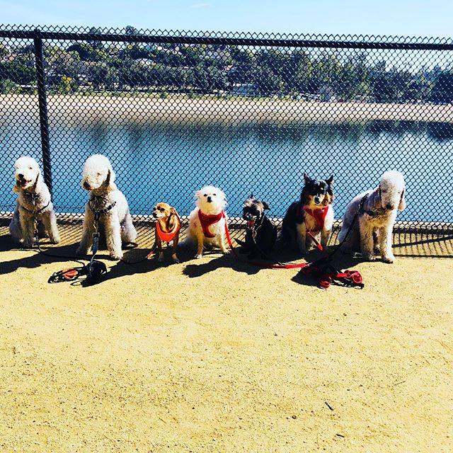 #bestfriends#silverlake#jointhepack#eastsidehounds