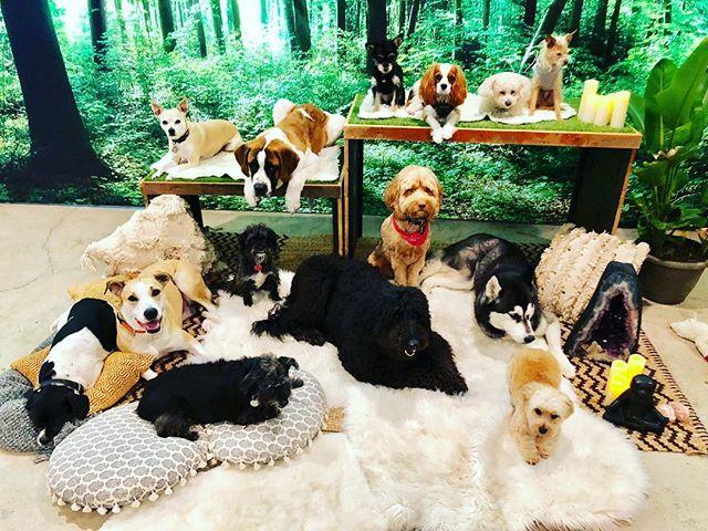 #rainydays @denurbandogretreat #packnation#dogsofinstagram #eastsidehounds