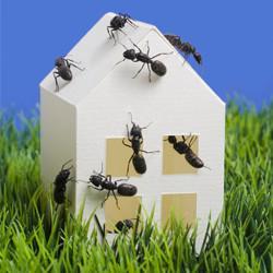 ants-home.jpg