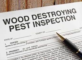 Termite Report