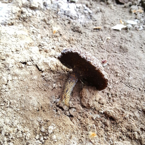 Fungi that will destroy wood.