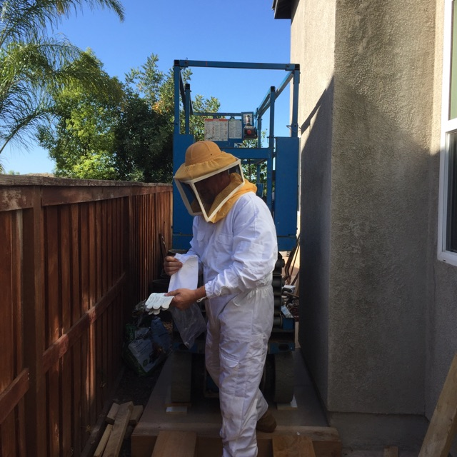 Bee Control