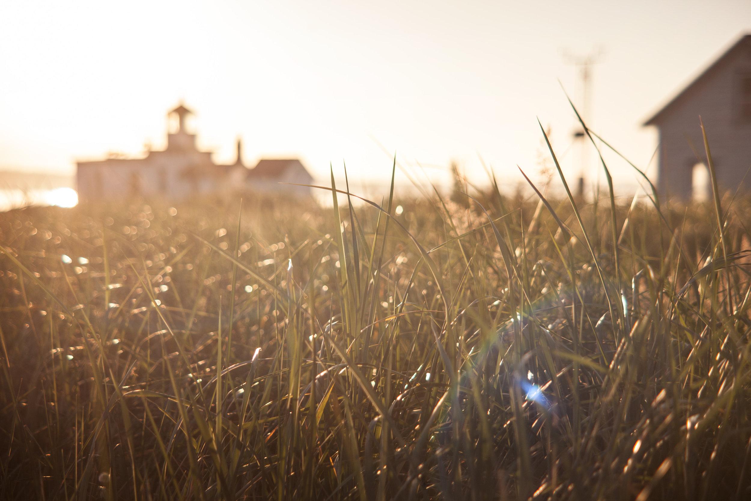 discovergrass.jpg