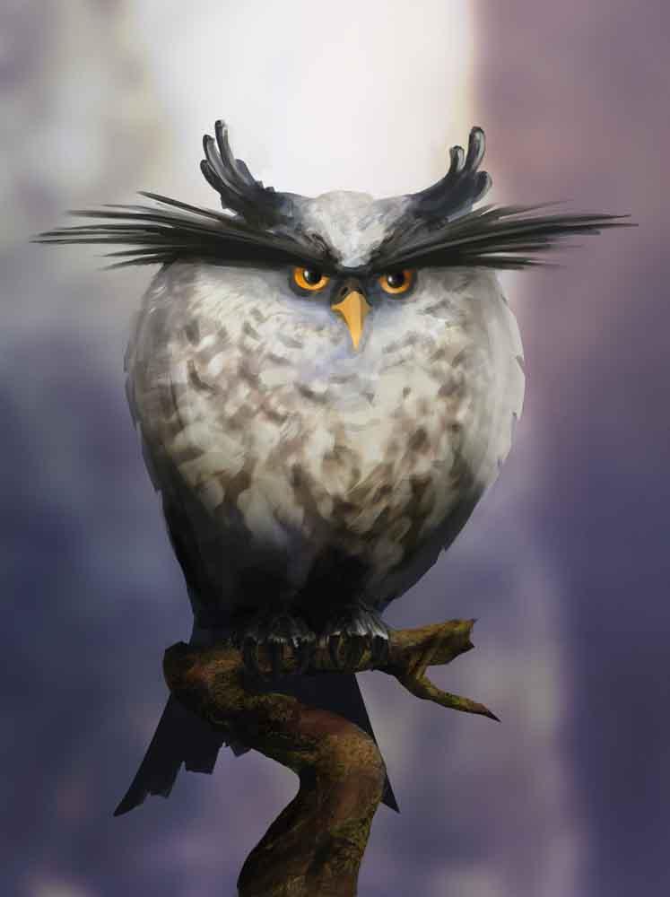 Angry_Owl.jpg