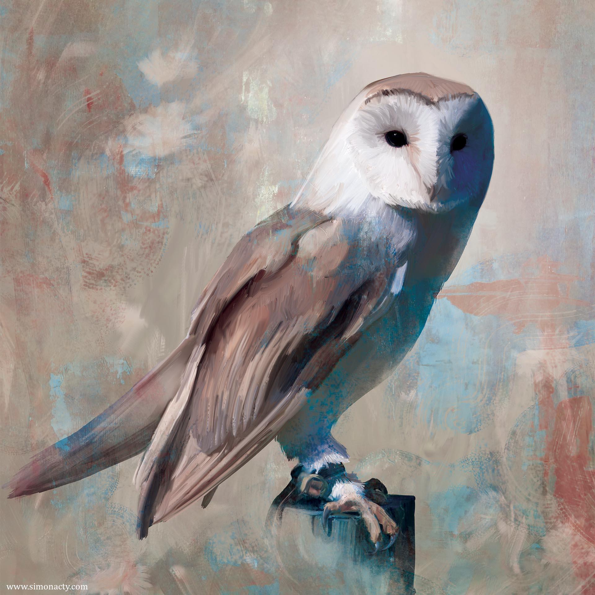 Barn_Owl3.jpg