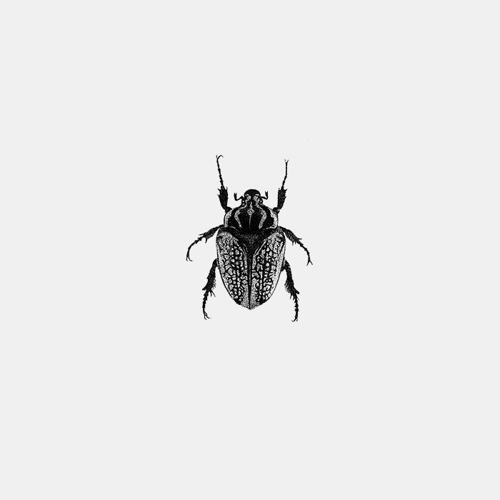 Beetle_Fer_alcazar.jpg